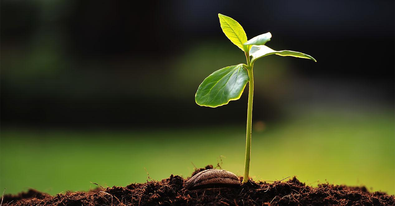 naturaleza-crecimiento