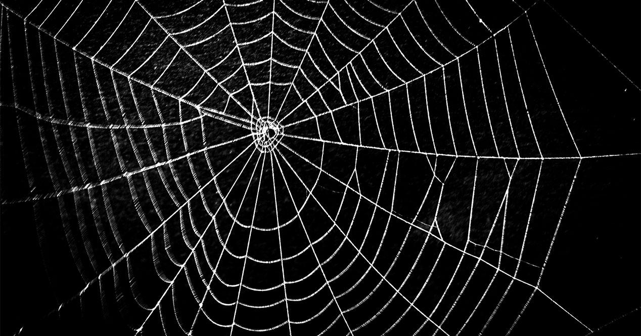 araña-web