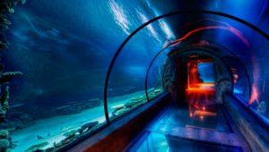 Internet de alta velocidad bajo del mar, un imposible más posible que nunca