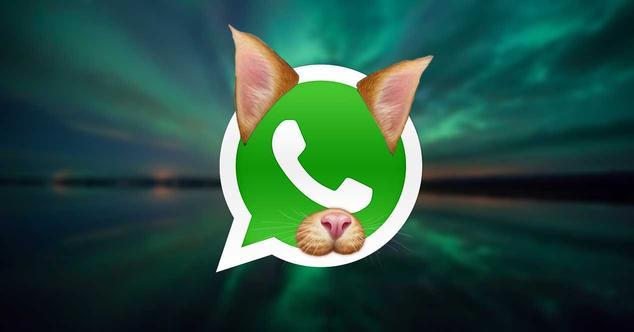 whatsapp-gato-filtro-filtros