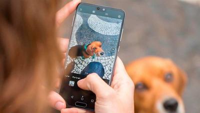 La inteligencia artificial se alía con las fotos macro en el Huawei P20 Pro