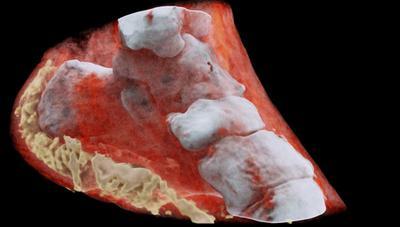 Crean el primer escáner de rayos X en 3D y a color