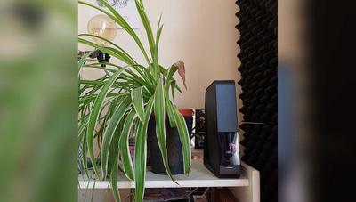 Esta planta crece alejándose del router, pero no tiene que ver con la radiación del WiFi