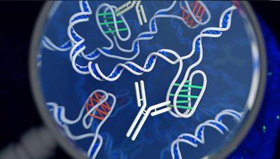 Hacemos un test de ADN: descubrimos de dónde venimos y qué enfermedades podemos padecer