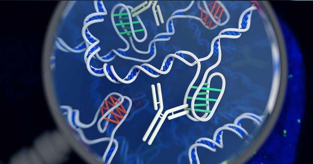Ver noticia 'Hacemos un test de ADN: descubrimos de dónde venimos y qué enfermedades podemos padecer'