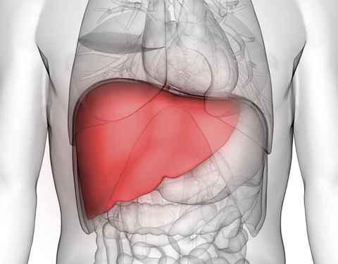 Salva vidas! Dispositivo en 3D estabiliza a personas enfermas del hígado