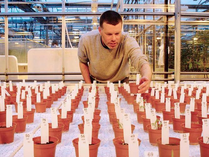 pruebas de cultivos con suelo marciano